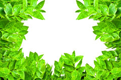 Frame from green leafs  Royalty Free Stock Photography