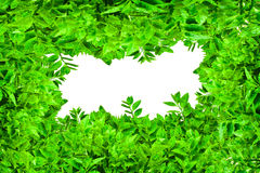 Frame from green leafs  Royalty Free Stock Photos