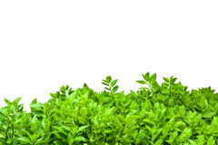 Frame from green leafs Stock Photography