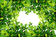 Frame of Green leave Royalty Free Stock Photography