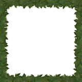 Frame green leaves Royalty Free Stock Photos