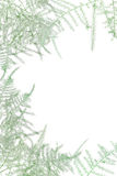 Frame from green leaves royalty free stock photos