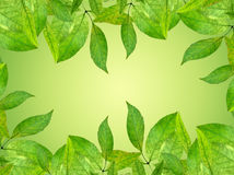 Frame from green leaves. Background spring. Stock Photo