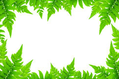 Frame from green leaves and Fern leaves on white background for isolated Royalty Free Stock Photography