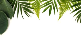 Frame of green leaves Stock Images