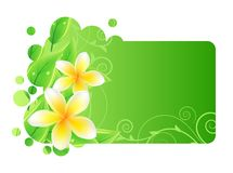 Frame with green leaves and frangipani Royalty Free Stock Images