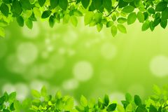 Green leaves with green blurry background stock photos