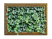 Frame  with green leaves inside Stock Photo
