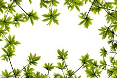 Frame of green leaves isolated on white background. royalty free stock photos