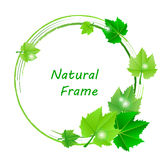 Frame with green leaves Stock Images