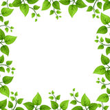 Frame with green leaves. Vector illustration. Royalty Free Stock Image