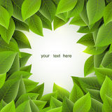 Frame of green leaves, vector stock images