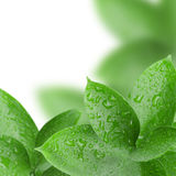 Frame of green leaves with water drops Royalty Free Stock Photo