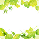 Frame of green leaves by watercolor paint. With vector data vector illustration