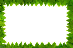 Frame from green leaves on white background with copy space for text. Border Stock Photography