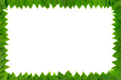 Frame from green leaves on white background with copy space for text. Border Stock Photo