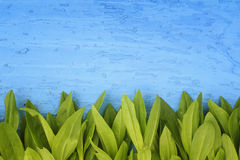Frame of green leaves on a wooden blue  surface Stock Images