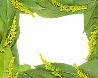 Frame of green leaves Royalty Free Stock Photography