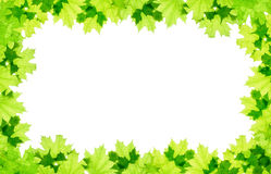 Frame of green maple leaves Stock Photos