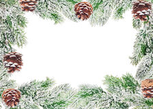 Frame from green pine branches and cones in snow Royalty Free Stock Photo