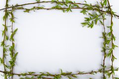 Frame with green willow branches on a white background. Copy space in the middle for your text royalty free stock photos