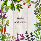 Frame with hand drawn culinary herbs and spices. Vector illustration Stock Photography