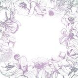 Frame  with hand drawn graphic and gradient  sketch with summer flowers for flower garden. Papaver, echinacea, iris, ajuga, sedum, eupatorium. Vector Stock Photo