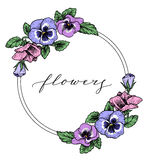 Frame with hand drawn pansy flowers Royalty Free Stock Photo