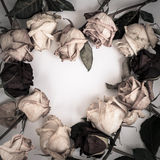 Frame heart from dry roses. Withered rose Stock Images