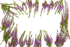 Frame of heather Stock Images