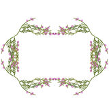 Frame with heather Stock Photography