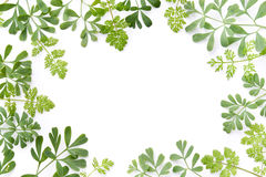 Frame of herbal leaves Stock Photography
