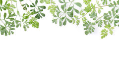 Frame of herbal leaves Stock Photo