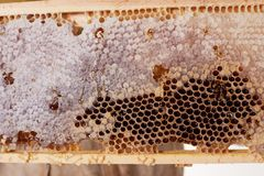 A Frame Of Honey Stock Images
