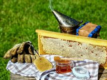 Frame honey. tools for beekeeping on wooden table. Beekeeping concept royalty free stock images