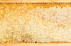 Frame with honeycomb full of honey Stock Images