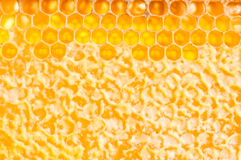 Frame with honeycomb full of honey Royalty Free Stock Photo