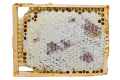 Frame honeycomb full of honey royalty free stock image