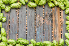 Frame is of hops and malt Royalty Free Stock Image