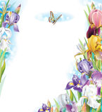 Frame with Iris flowers. And butterfly