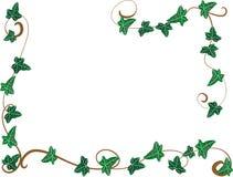 Frame from ivy vector illustration