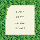 Frame with ivy borders. For photo or picture Royalty Free Stock Image