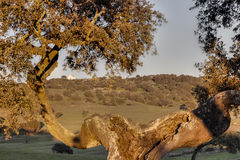 Frame landelijk landschap van Castro, Verde, in Alentejo, Portug Royalty-vrije Stock Fotografie