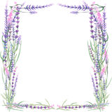 Frame with lavender Stock Photography
