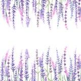 Frame with lavender royalty free illustration