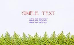 Frame leaf Stock Images
