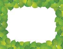 Frame of the leaf Stock Image