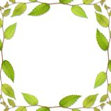Frame of leaf Royalty Free Stock Photography