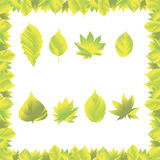 Frame with leaf. Vector green spring frame with leaves Stock Image