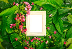 Frame on Leaf Background. Layout wooden frame on green leaves and tropical red flower background, top view royalty free stock photography